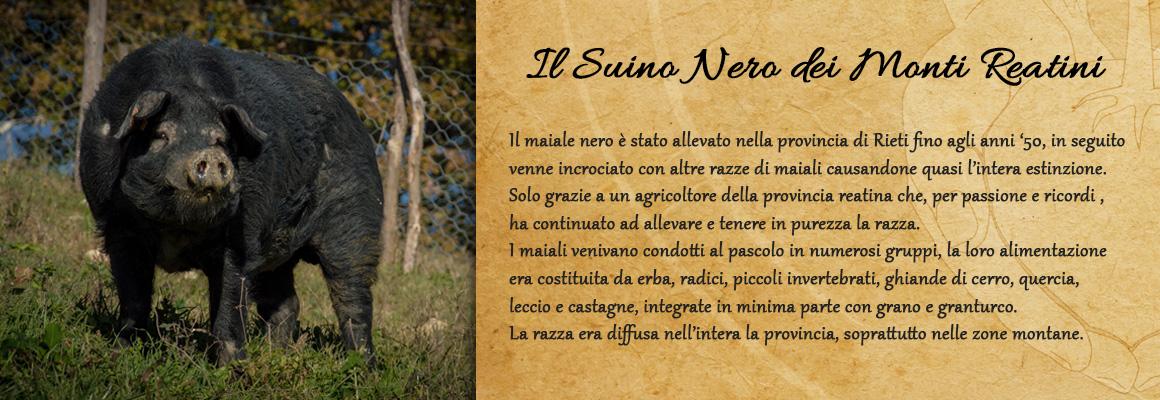 allevamento_suino_nero_dei_monti_reatini