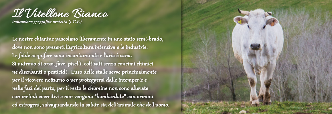 vitellone_bianco_chianina_igp
